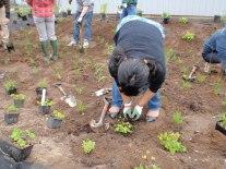 Botany class plants garden.