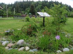 Covenant Presbyterian Church rain garden