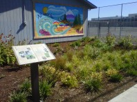 Gresham HS rain garden