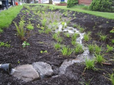 At one year old, native plants are establishing well and the garden captures and infiltrates an estimated 196,000 gallons of runoff per year, reducing pollution in Johnson Creek and recharging local groundwater supplies.