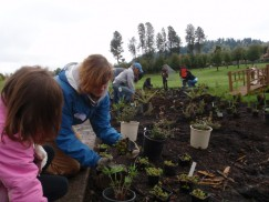 planting a rain garden with students