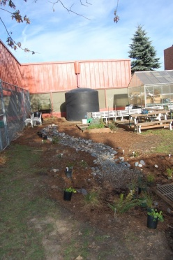 Fall 2009 - garden planted and waiting for it's first rain.