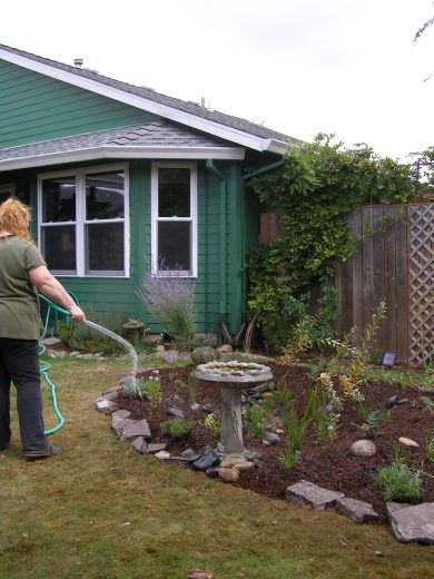 Homeowner waters new rain garden