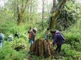 Mt. Hood Community College students help with invasive weed maintenance.