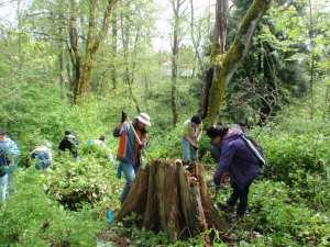 volunteer weed removal