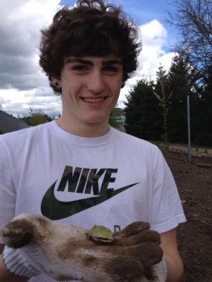 Student finds chorus frog in school rain garden