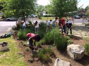 Planting the school rain garden after school (photo Nestor Campos)