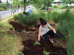 Students care for their school rain garden (photo Nestor Campos)