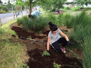Students care for their school rain garden (photo Nestor Campos)