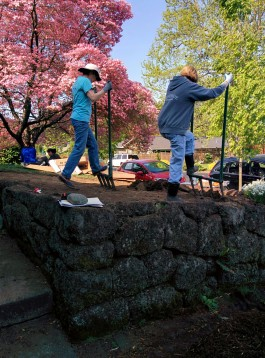 Stormwater Stars hands-on installation, using broad forks to loosen compacted soil